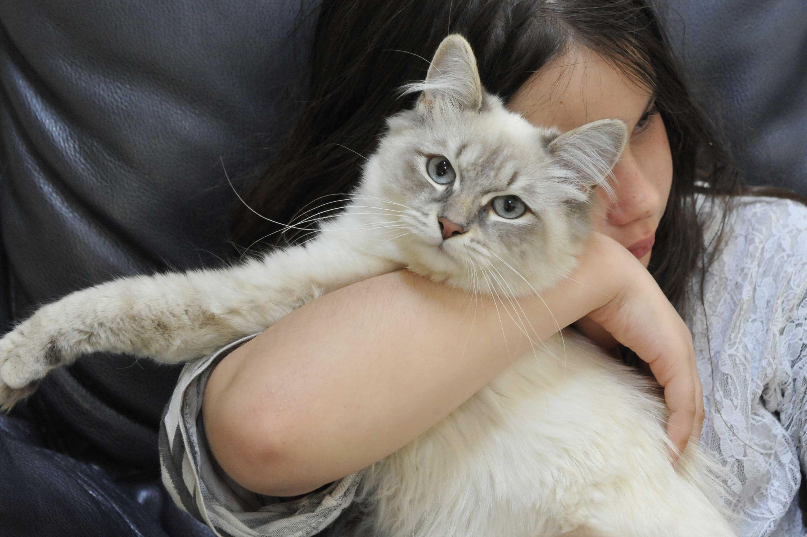 chat sibérien et enfant