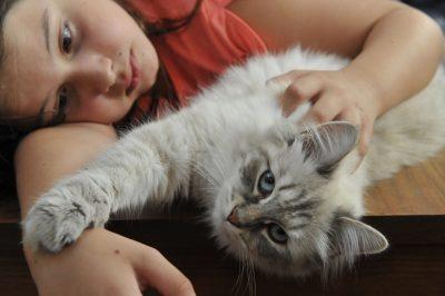 chat sibérien allergie